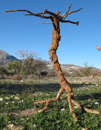 Geweihtragender Wendehals', Mandelholz, mit Braun koloriert, Fundort Andalusien.