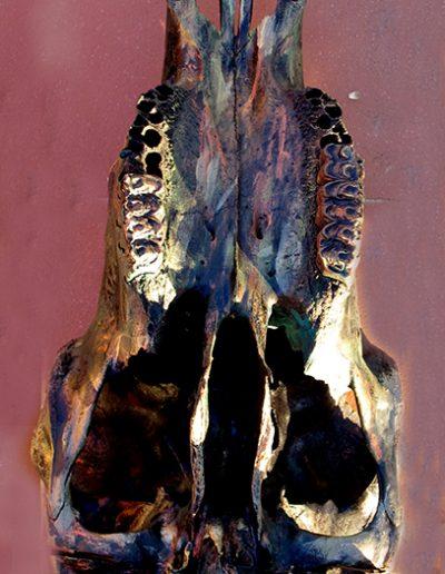 Charakterkopf', Maultierschädel, Fundort Andalusien, mit Schwarz, Bronze, Blau und Silber koloriert.